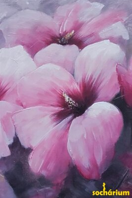 Hibiscus flowers - pink